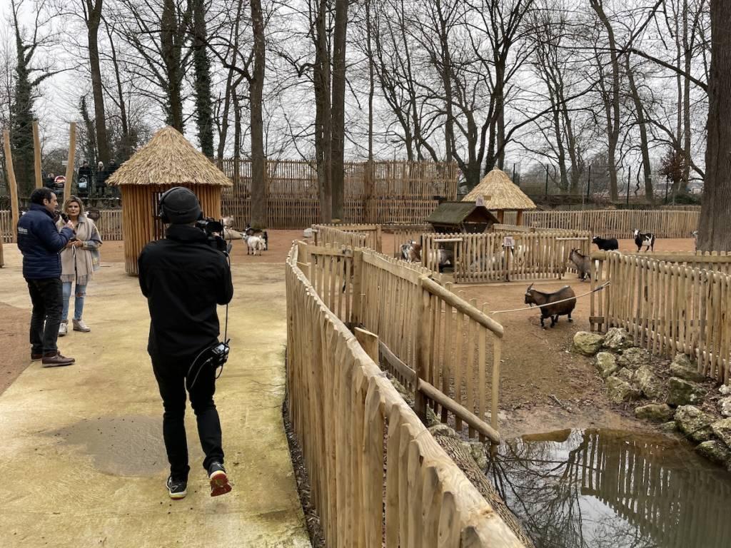 Livestream von den Ziegen im Tierpark Hellabrunn